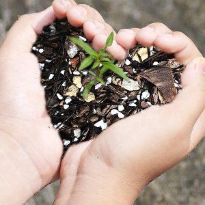 Đất trồng & giá thể