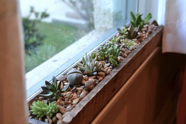 sen đá cạnh cửa sổ