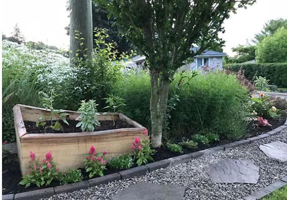 vườn rau trước nhà 3